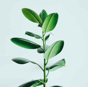 A plant simbolising law firm's digital transformation